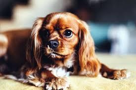 perro peluquería