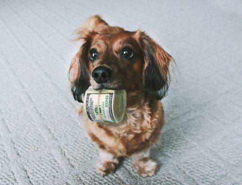 ¿Cuánto cuesta mantener a nuestro perro?