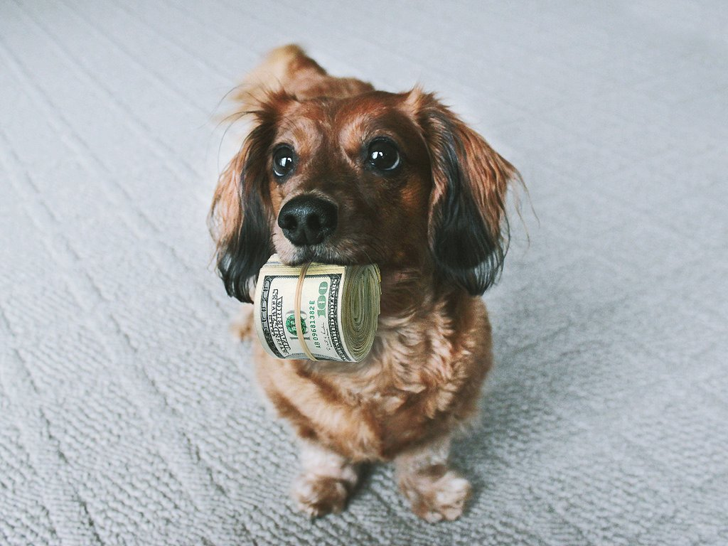 perro y dinero