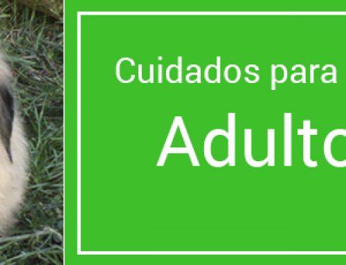 Cuidados de un perro Adulto