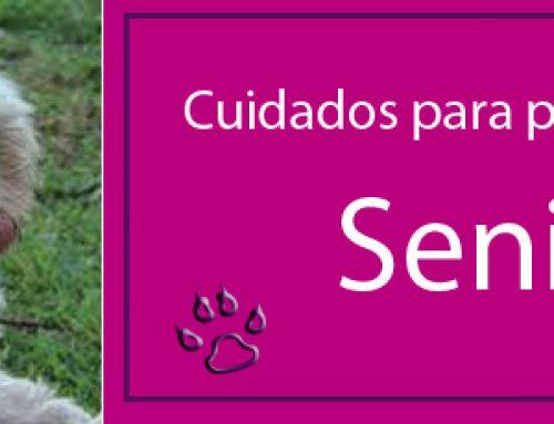 Cuidados del perro senior